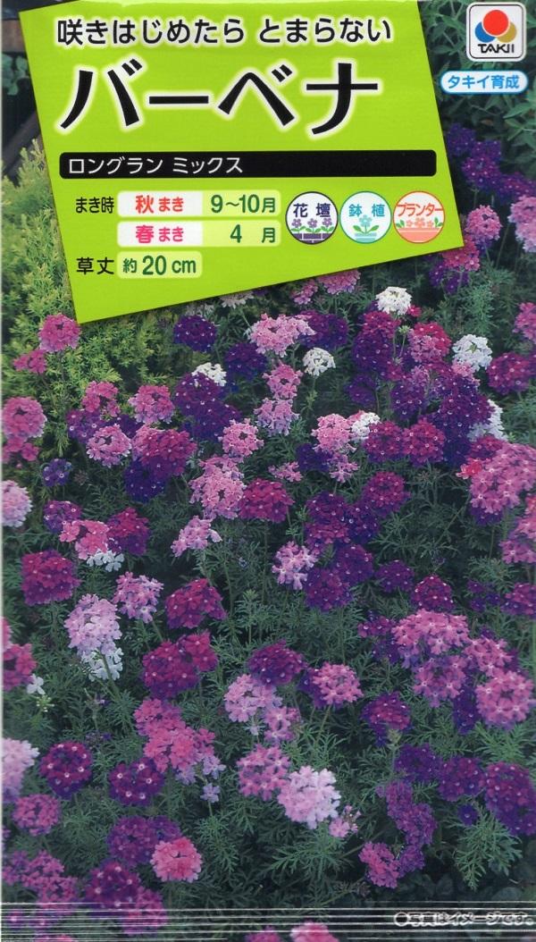 宿根性のバーベナ 花色が豊富で楽しい品種 新作からSALEアイテム等お得な商品満載 現品 種子 タキイ種苗のタネ バーベナ ロングランミックス