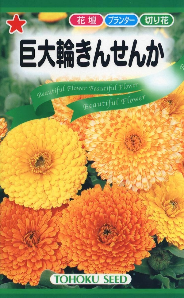 爆買い新作 花壇や切花に最適な大きな花の金盞花 格安SALEスタート 種子 巨大輪きんせんかトーホクのタネ