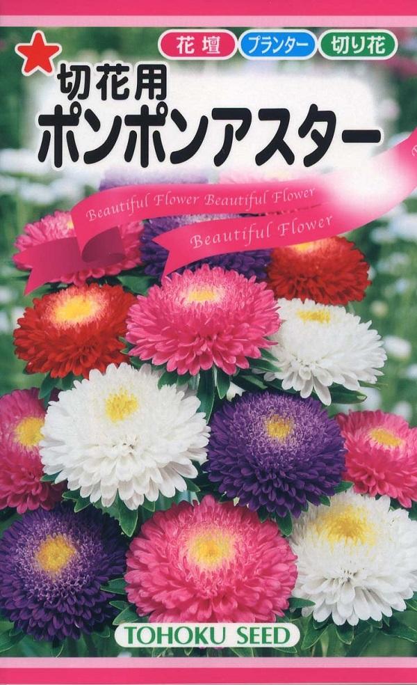 手毬のような万重咲きのアスター 種子 切花用 トーホクのタネ ポンポンアスター 引出物 モデル着用 注目アイテム