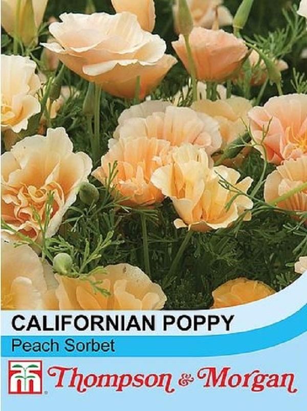 楽天市場】【輸入種子】Thompson & Morgan Californian Poppy Peach ...