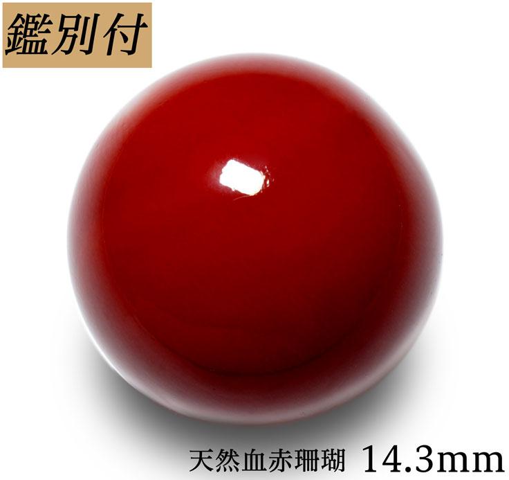 【鑑別付】天然血赤珊瑚 14.3mm 20.380ct 日本産サンゴ コーラル 本珊瑚 丸珠 ルース 原石【加工承ります】