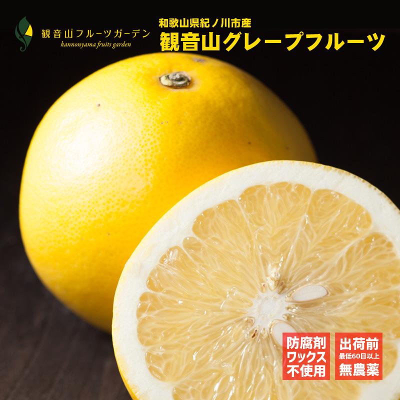 和歌山 観音山 国産グレープフルーツ A級品 7kg 観音山フルーツガーデン