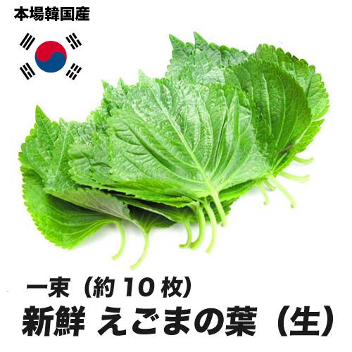 新鮮 まとめ買い特価 ゴマの葉 訳ありセール 格安 生 韓国産 韓国野菜 えごまの葉 エゴマ 約10枚 韓国食材 〔韓国野菜〕お取り寄せ 一束