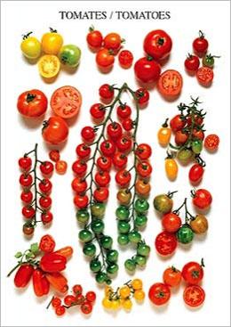 ポストカード トマト 超安い 在庫処分
