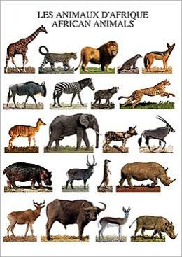 セール特別価格 ポストカード アフリカの動物 訳あり品送料無料