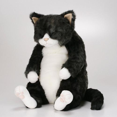 Cuddly(カドリー)ソメゴロー(Somegoro)布十番の小唄のお師匠さん宅に在住!♪『Cuddly(カドリー)は抱きしめたいほどに可愛い!』