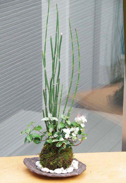 コケダマ 観葉植物 育て方のしおり付 お手入れ相談 電話 メールサポート 京都 十賊 町屋 苔玉 トクサ・初雪カズラ 寄せ植え苔玉 くらま岩器セット 敷石つき きりりとした立ち姿 研草 研ぐ草 日陰