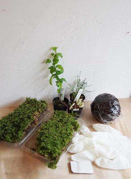 コケ玉を作ってみませんか?着いたその日にすぐ出来る。苔玉の作り方・育て方のしおり付 お手入れ相談 電話メールによる安心サポート おとなの趣味 手づくりキット 苔玉教室 苔玉作成キット 植物苗がついている 苔玉キット 苗付(ミニ苗3つ) 手作り 初心者 こけだまの材料 かんたん作成キット 苗・苔・苔玉用に配合した土・糸・作り方のしおりセット・樹種別育て方のしおりセット