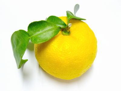 葉付黄柚子〈ハツキキユズ〉1ケース、9~11個前後、1Kg前後