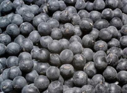【乾物】丹波黒豆〈タンバクロマメ〉別称:黒大豆〈クロダイズ〉1Kg