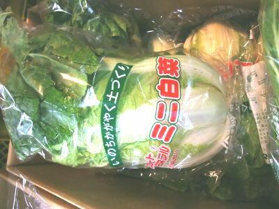 送料無料対象外 ミニ白菜〈ミニハクサイ〉1ケース 3Kg~10Kg前後 10個前後 お買い得品 信憑