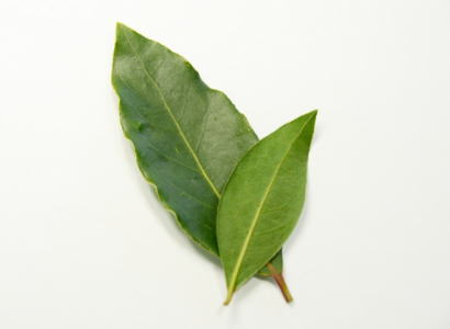 ローリエ別称:月桂樹の葉〈ゲッケイジュノハ〉1ケース、10パック前後
