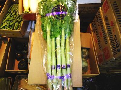 チシャトウ別称:茎レタス〈クキレタス〉1ケース、9Kg~15Kg前後6束前後