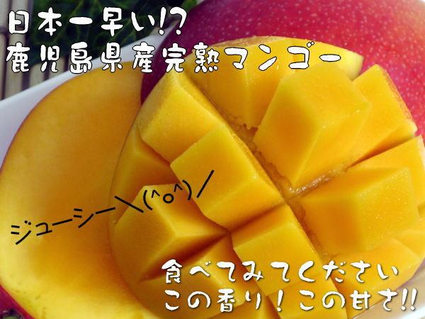 鹿儿岛县鹿儿岛最成熟的芒果 2 公斤 (5-8) 九州苹果芒果芒果