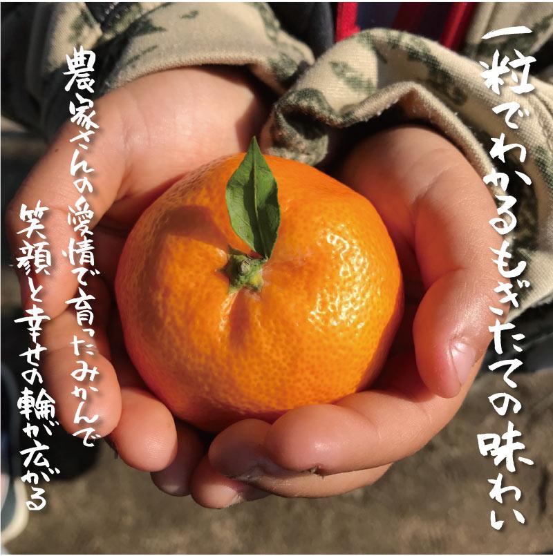 フルーツ 果物 みかん 20kg 【9月下旬より順次出荷】 熊本 240玉前後  国産 極早生 早熟温州 大嶌屋(おおしまや)