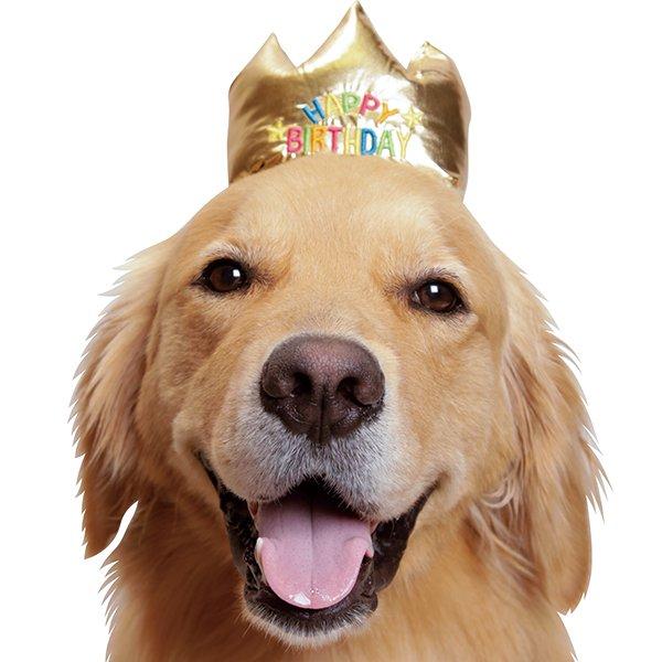 お誕生日にはこの王冠をかぶってお祝いしましょう バースデー王冠 あす楽対応 ブランド買うならブランドオフ オンラインショップ 犬のかぶりもの