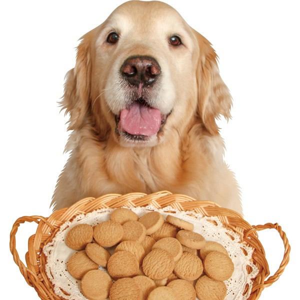 安全・おいしさにこだわり作っている 『食物アレルギー対応ビスケット』 SorBitz(ソルビッツ)【犬のおやつ・食物アレルギー対応ビスケット】
