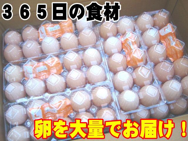 日常の食材 卵を大量でお届け 鶏卵 Lサイズ1箱20パック入