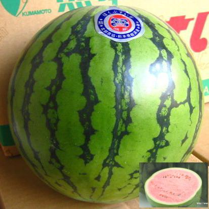 西瓜ファンにお届けします ≪スーパーセール限定特売≫中玉 すいか スイカ 西瓜 高品質 1玉 大特価!!
