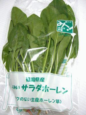 流行 激安超特価 アクのない生食 サラダ ほうれん草 1袋