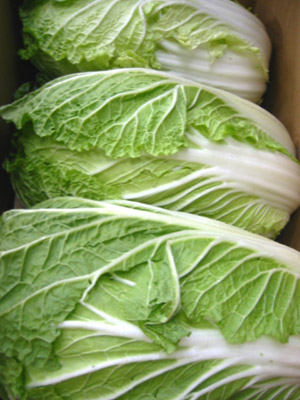 1箱からの販売です 国産 セール特価 値引き はくさい 1箱12kg 白菜