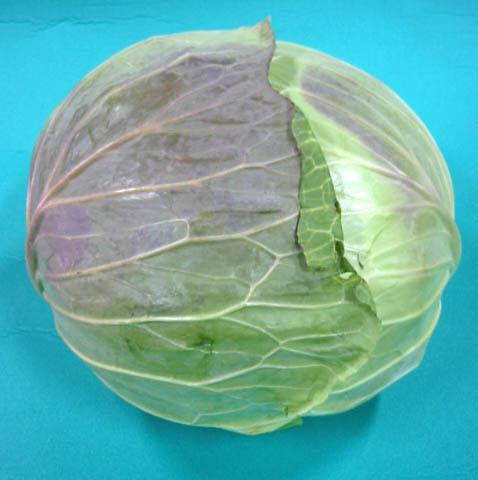 1玉からの販売です!焼肉などに 日常の一般野菜 キャベツ 1玉