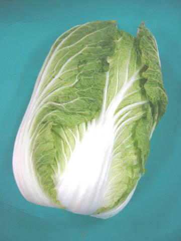 1玉からの販売です 日常の一般野菜 はくさい 休み 1玉 お値打ち価格で 白菜