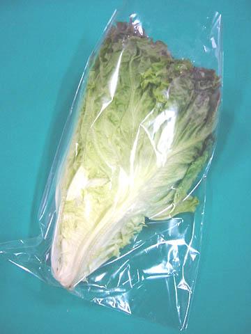 豊富な品 1株からの販売です 2020秋冬新作 日常の一般野菜 サニーレタス 1株