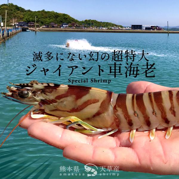 えび くるま 大分県姫島産養殖車えびオンラインショップ