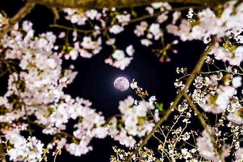 ふとみあげた空 心にしみる風景 最安値 素敵な一瞬をインテリアとして お手紙として プレゼントに添えるメッセージカードとして 風景写真 ポストカード 空 雲 まとめ買い特価 星 風景空の写真家 桜月夜 空工房 花 写真栗林公園 SIESTA 飛行機 ライトアップ フォトグラファー 月