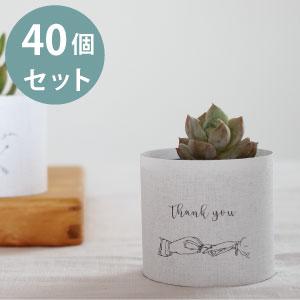 プチギフト 多肉植物 誕生日プレゼント セット 高い素材 40個 ウェディング ウエディングシーン向け 結婚式 植物