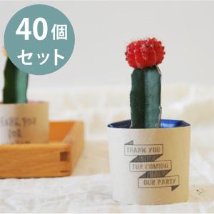 プチギフト サボテン セット 40個 お洒落なフォント 植物 日本メーカー新品 結婚式 パーティ 退職 ウェディング 予約販売品 お礼 二次会