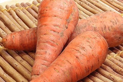 野菜 北海道産 西日本産 または中部地方産 約5kg または特別栽培にんじん 格安 期間限定で特別価格 価格でご提供いたします 有機または自然農法