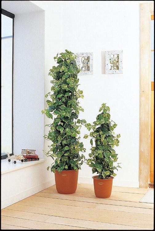 観葉植物 大型 ピュアメイト ポトスポール 180cm 山崎産業 ED004-180X-MB