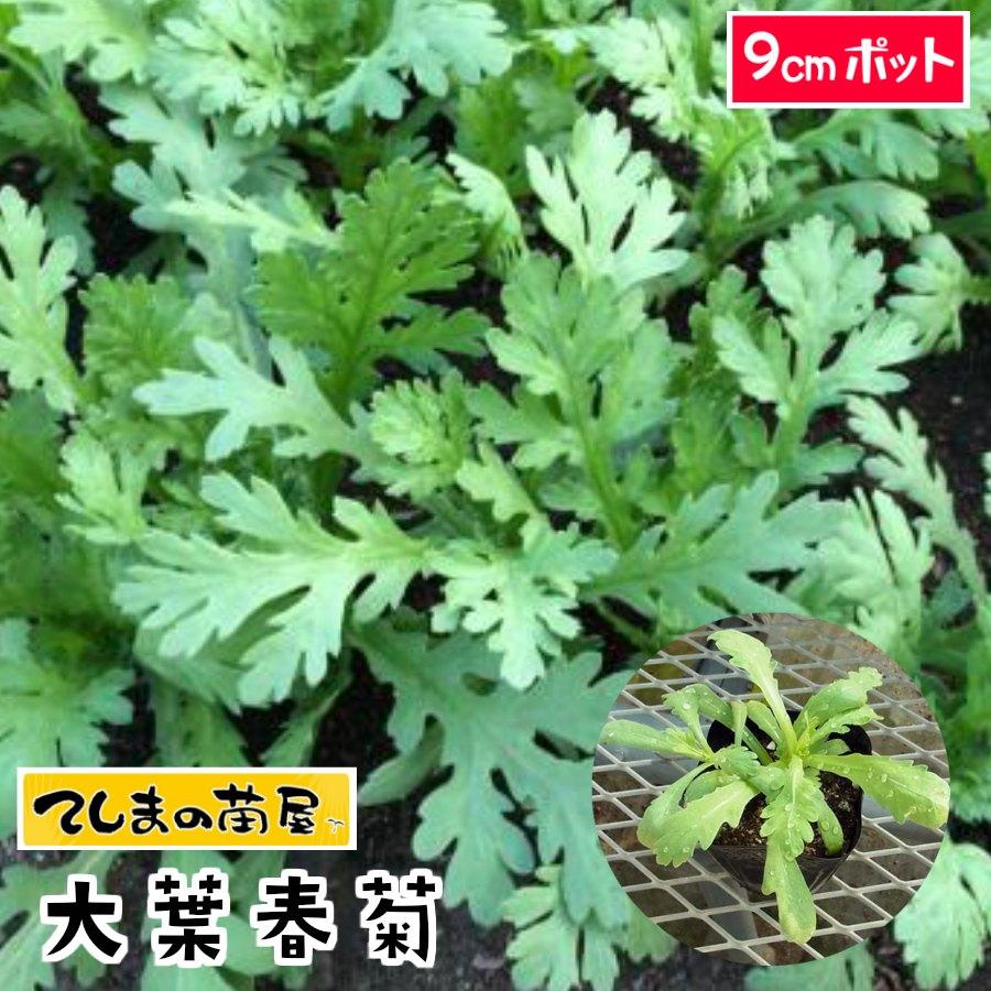 秋から挑戦!初めての野菜作りに。育てやすい、初心者におすすめの種や苗を教えて