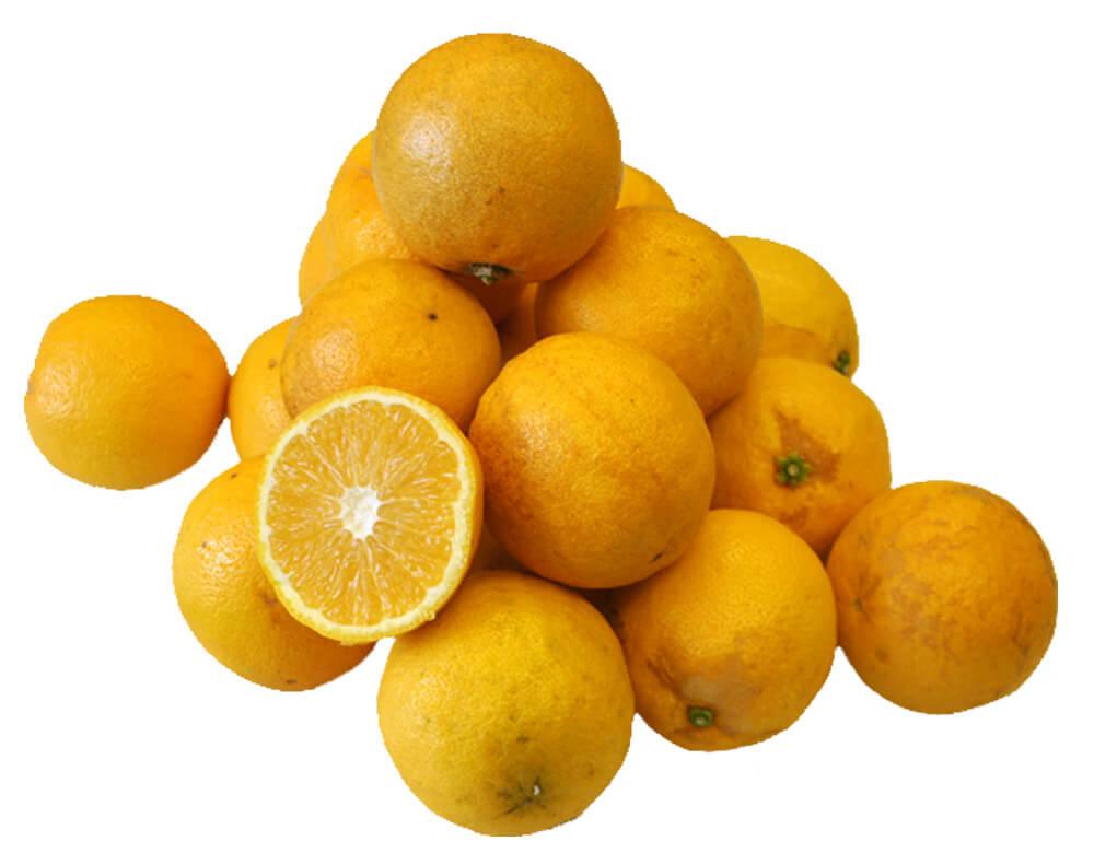 柑橘 静岡県産 レモネード 約5kg 2S~2Lサイズ 常温