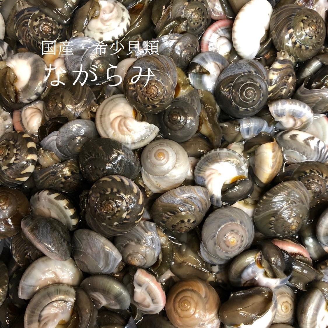ちょっと珍しい貝類です 定番の塩茹ではお酒が進みます 生 ながらみ 貝 国産 愛知 千葉 1kg 豊洲直送 x1kg 他 お得クーポン発行中 冷蔵 海外限定 ながら見 ダンベイキサゴ