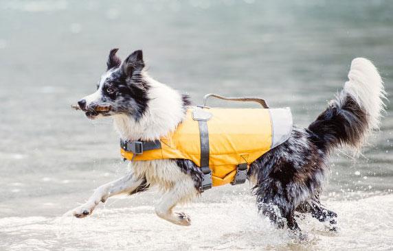 <ニューモデル>ライフジャケット 犬用 フルッタ Hurtta 中型犬・大型犬用 【送料無料】愛犬の泳ぎをサポート!ドッグウェア Life Jacket 犬用ライフジャケット 犬 ドッグ アウトドア フィンランドのドッグブランド