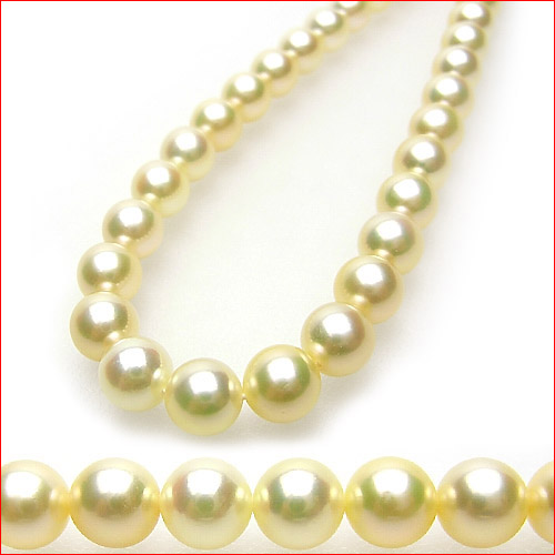 ナチュラルゴールデンカラー!すっきりきれいな6.5-7ミリあこや真珠ネックレス 0619PUP10JU