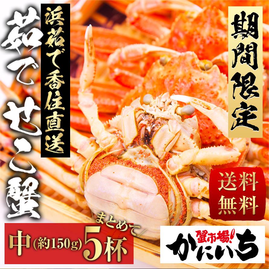 茹でせこ蟹 中サイズ(約150g) まとめてお得!5杯詰め合わせ!