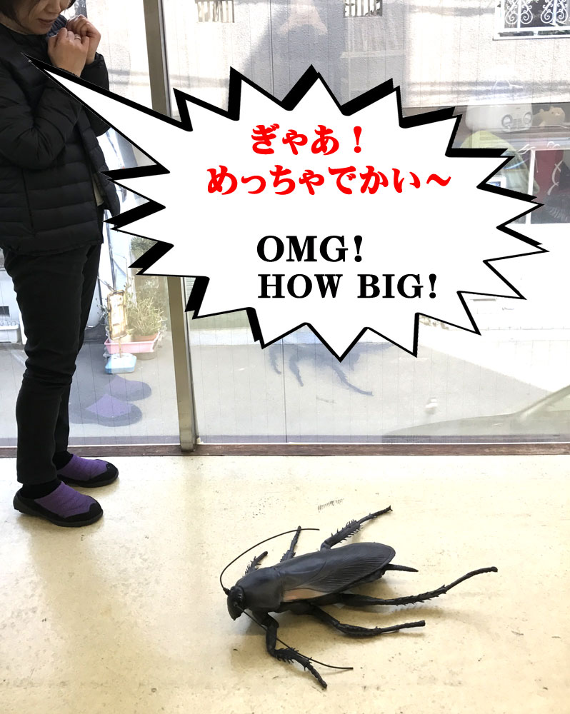 メガゴキブリ 图巨人 !蟑螂图 (总长度 65 厘米) 蟑螂巨型蟑螂 !