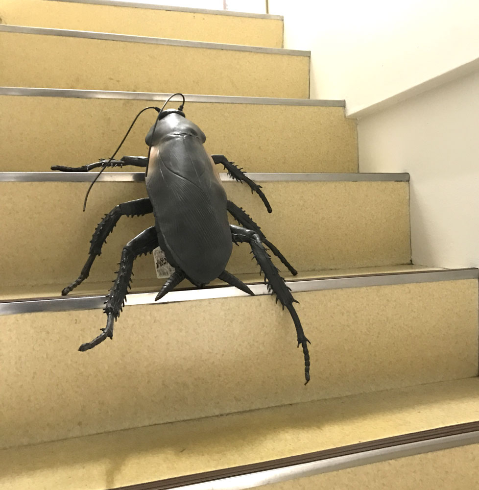 Cockroaches figure giant! Cockroaches figure (total length 65 cm) メガゴキブリ giant cockroaches!