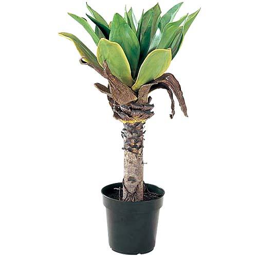 造花 装飾 90cmアエロニウムツリー ※代引不可商品