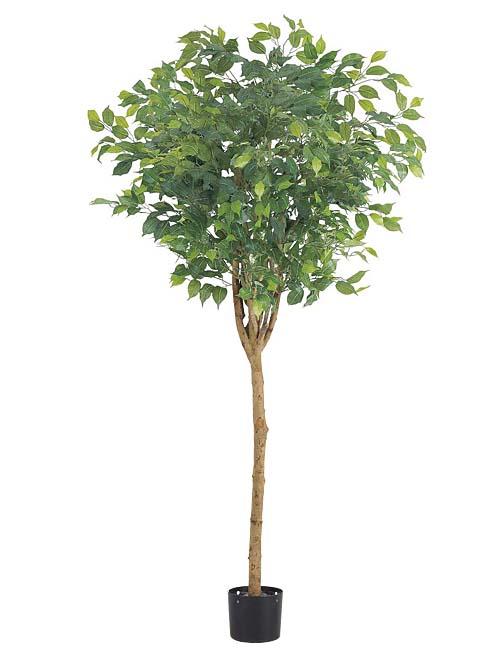 観葉植物 造花 180cmラウンドフィカスツリー(ナチュラルトランク)【代引き不可商品】※ポットは別売り