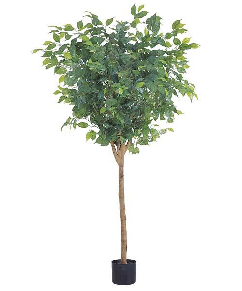 観葉植物 造花 150cmラウンドフィカスツリー(ナチュラルトランク)【代引き不可商品】※ポットは別売り