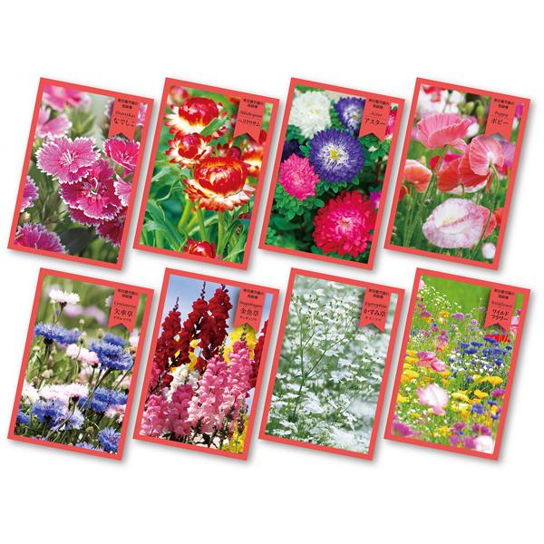 花の種(新デザイン)5000個セット販売 景品・粗品 販促品・ノベルティ ※季節・時期により種類は変動いたしますご了承ください