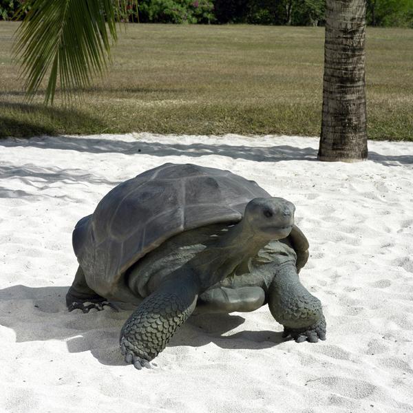 【送料無料】【メーカー直送・同梱不可・代引不可・返品不可】ガラパゴスの遺産 / Galapagos Tortoise