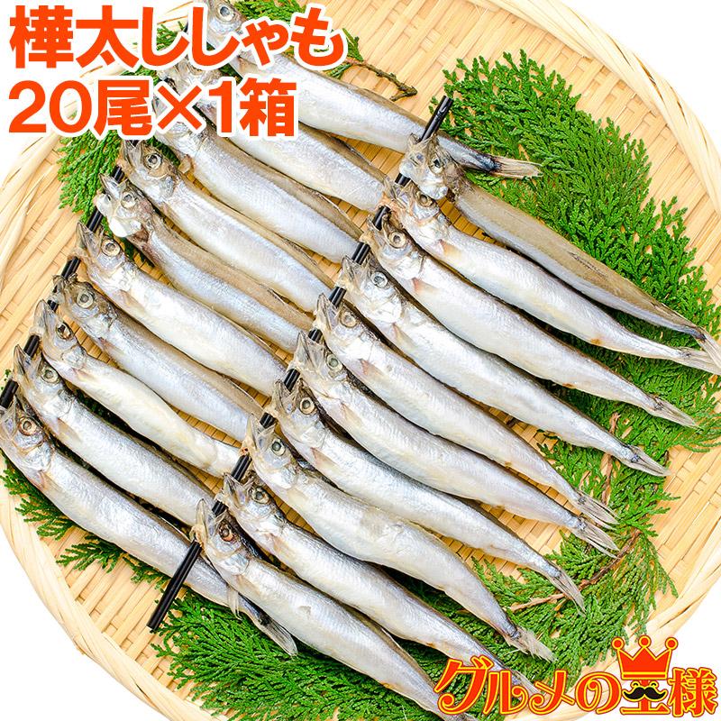 ランキング1位獲得 たくさんの卵が入った子持ちシシャモ 大サイズが嬉しい ししゃもはご飯のおかず お酒のおつまみに最適 居酒屋にも卸しています 子持ちししゃも 20尾 大サイズ 業務用 箱入り ししゃも シシャモ 焼魚 樺太シシャモ 食べる小魚 ノルウェー産 築地 酒の肴 オンラインショッピング 40%OFFの激安セール カルシウム 柳葉魚 r レシピ ギフト カラフトシシャモ