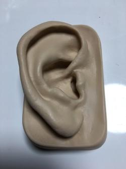 耳つぼ 耳模型 練習用 イヤーマネキン 耳ツボジュエリー  業務用 施術用 フランス製 プロ仕様 講師用