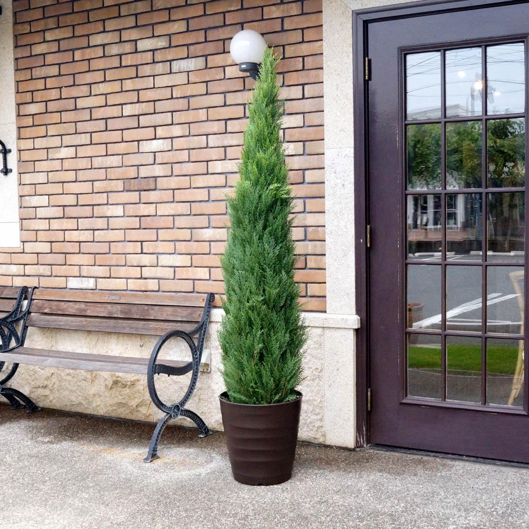 【おすすめ】 ゴールドクレスト1.8m(屋外対応):花デコレイトgreen-arts店-花・観葉植物